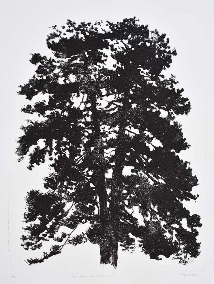 gravure arbre